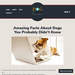 Amazing Facts About Dogs You Probably Didn't Know