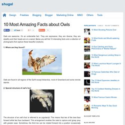 10 Most Amazing Facts about Owls