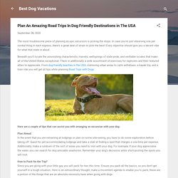 Plan An Amazing Road Trips In Dog Friendly Destinations in The USA