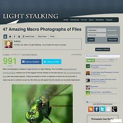Light Stalking » 47 Amazing Macro Photographs of Flies