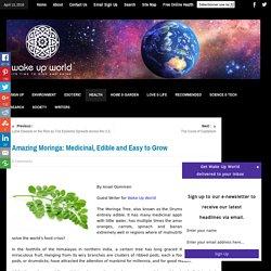 Amazing Moringa: Medicinal, Edible and Easy to Grow