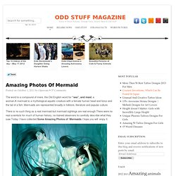 Amazing Photos Of Mermaid