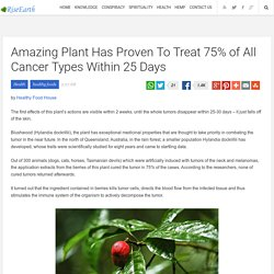 Amazing Plant Has Proven To Treat 75% of All Cancer Types Within 25 Days