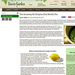 The Amazing All-Purpose Pine Needle Tea