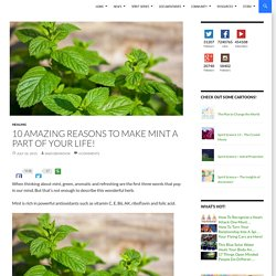 10 Amazing Reasons To Make Mint A Part Of Your Life!