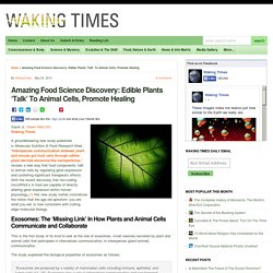 Amazing Food Science Discovery: Edible Plants 'Talk' To Animal Cells, Promote Healing