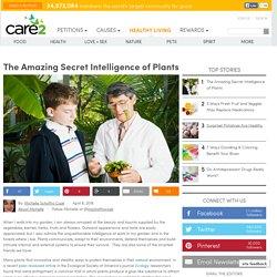 The Amazing Secret Intelligence Of Plants