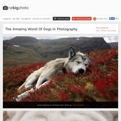 The Amazing World Of Dogs In Photography