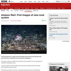 Amazon Reef: First images of new coral system