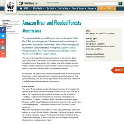 Amazon River and Flooded Forests