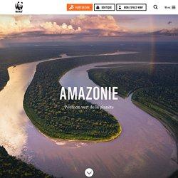L'Amazonie, une forêt tropicale en danger