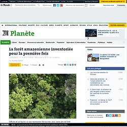 La forêt amazonienne inventoriée pour la première fois