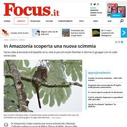 In Amazzonia scoperta una nuova scimmia