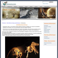 Ambulocetus. Images. Videos