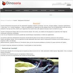 Axolotl . Ambystoma mexicanum. En Images. Dinosoria