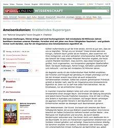 Ameisenkolonien: Krabbelndes Superorgan - SPIEGEL ONLINE - Nachrichten - Wissenschaft