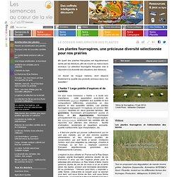 dossier semences et société de Semences Mag magazine des semences et graines vegetales
