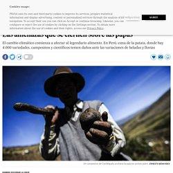 Perú: Las amenazas que se ciernen sobre las papas