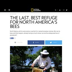 The Last, Best Refuge for North America's Bees - National Geographic