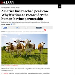 America has reached peak cow: Why it's time to reconsider the human-bovine partnership