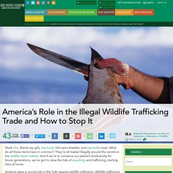 America's Role in the Illegal Wildlife Trafficking Trade and How to Stop It