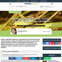Info 12 : Des insectes porteurs de virus : un projet américain qui inquiète des scientifiques