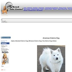 American Eskimo Information and Pictures, Spitz, American Eskimo Dog