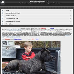 American Sentinel K9 - The most performance proven Bandog in existence! - American Sentinel K9, LLC