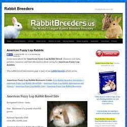 American Fuzzy Lop Rabbits