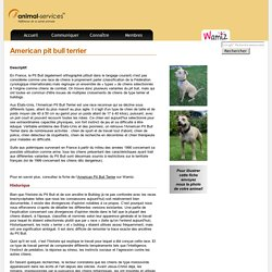 American pit bull terrier : fiche de chien de race - Animal Services