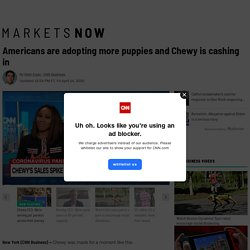 Chewy's sales are booming as Americans adopt more puppies during coronavirus pandemic