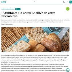 L'Amibiote : la nouvelle alliée de votre microbiote