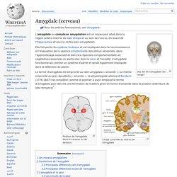 Amygdale (cerveau)