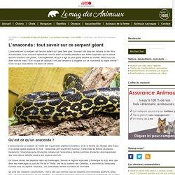 L'anaconda : tout savoir sur ce serpent géant