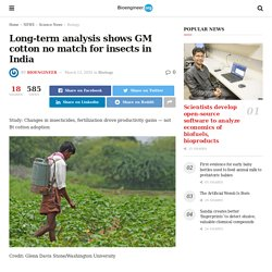 BIOENGINEER 13/03/20 Long-term analysis shows GM cotton no match for insects in India