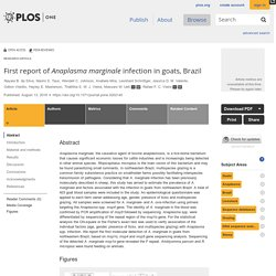 PLOS 13/08/18 First report of Anaplasma marginale infection in goats, Brazil