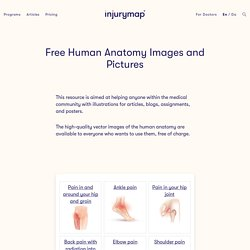 Anatomical Images: Free Human Anatomy Images and Pictures