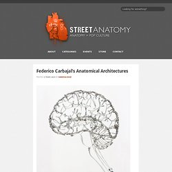 Federico Carbajal's Anatomical Architectures at Street Anatomy