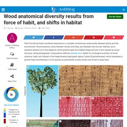 Wood anatomical diversity results from force of habit, and shifts in habitat - AoBBlog