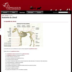 L'anatomie du cheval dans son ensemble - Hippologie.fr