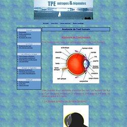 Anatomie de l'oeil humain - TPE 2006-2007 : Les mirages peuvent-ils expliquer certains mythes ou légendes?