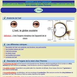 Anatomie de l'oeil : le globe oculaire