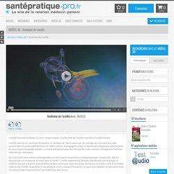Anatomie de l'oreille sur SantePratique-Pro.fr