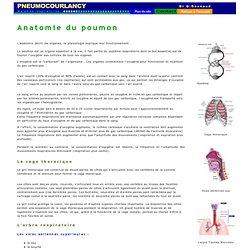 Anatomie du poumon