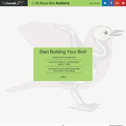 All About Bird Anatomy - The Cornell Lab of Ornithology