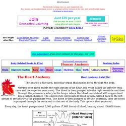 Heart Anatomy Glossary Printout