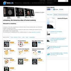 Human anatomy: medical imaging and illustrations