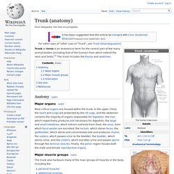 Trunk (anatomy)