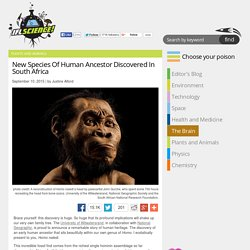 New Species Of Human Ancestor Discovered In South Africa