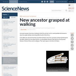 New Ancestor Grasped At Walking